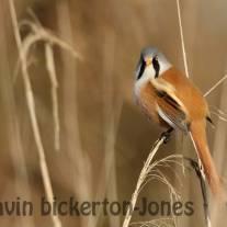 General Birdlife