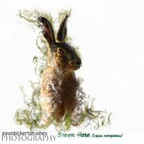 'British Wildlife' Art Print collection