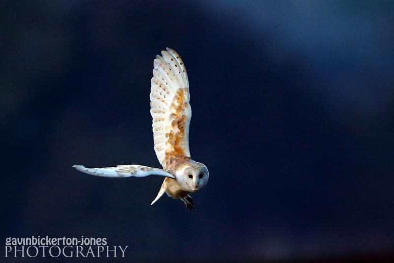 Old Buckenham Owl.