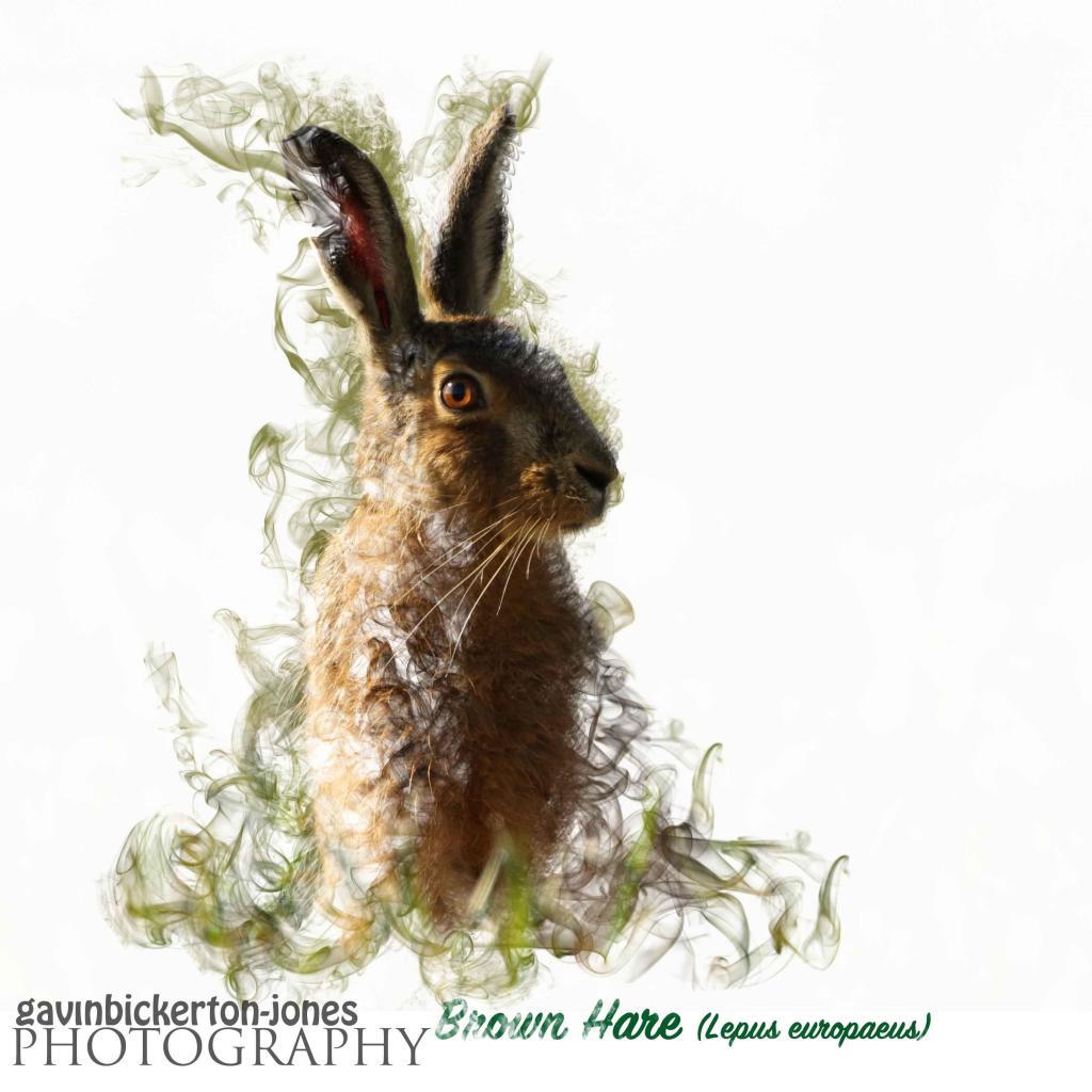 hare1_edited-2